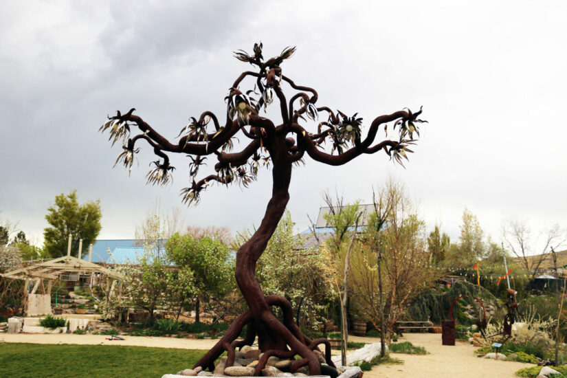 The Lanky Tree